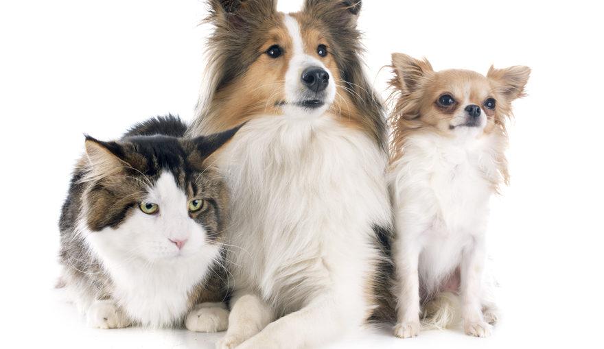 assurer son animal de compagnie