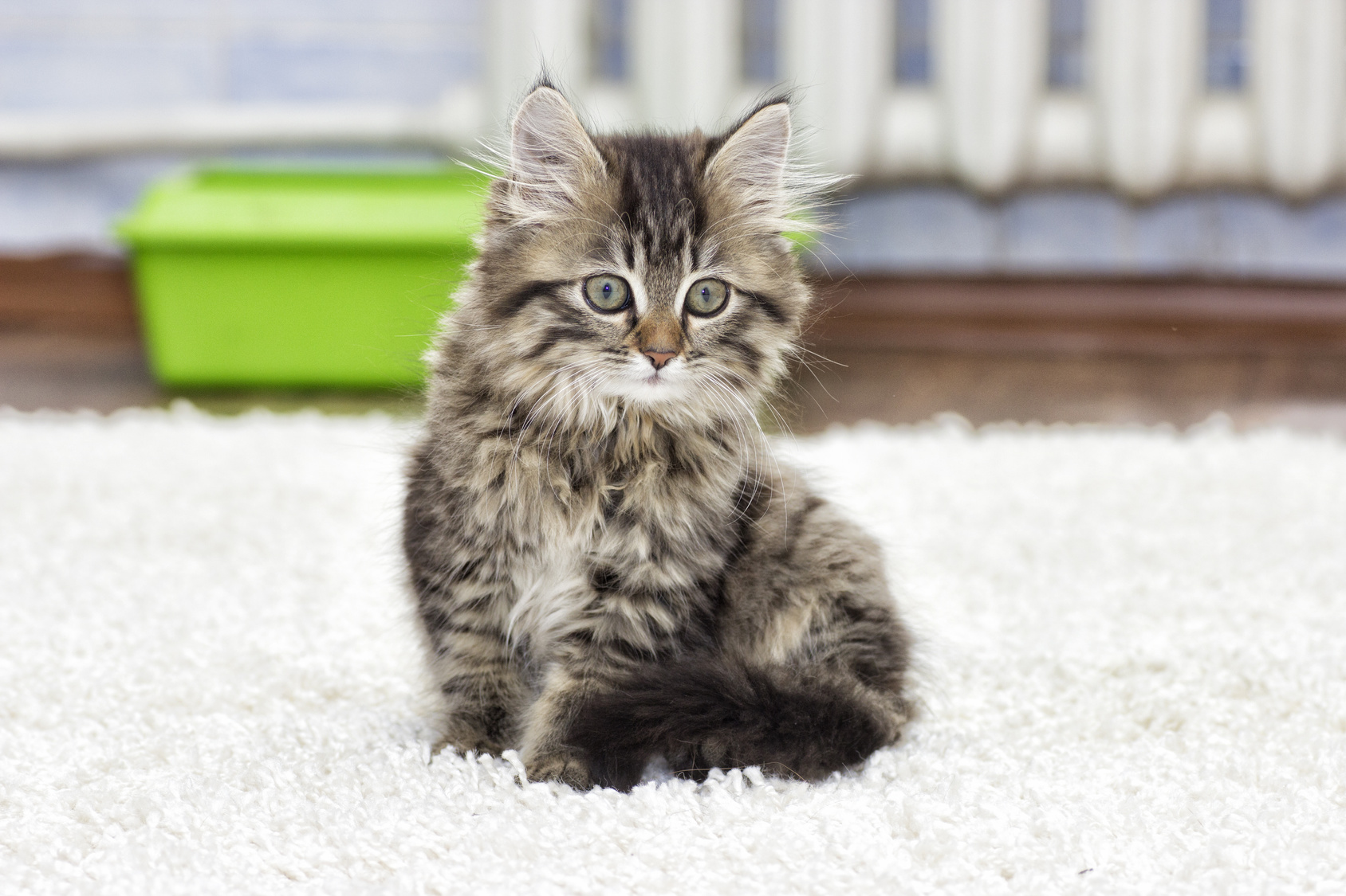 prot gez votre maison des griffes du chat. Black Bedroom Furniture Sets. Home Design Ideas